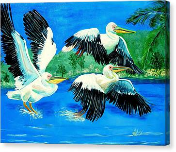 Pelican Trio Canvas Print