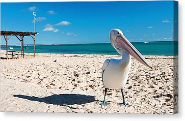 Pelican Under Blue Sky Canvas Print by Yew Kwang