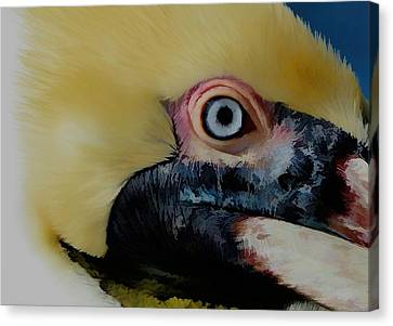 Canvas Print featuring the photograph Pelican Up Close by Pamela Blizzard