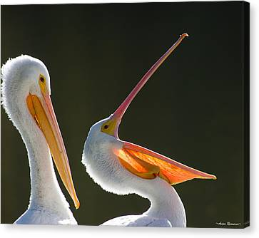 Canvas Print featuring the photograph Pelican Yawn by Avian Resources