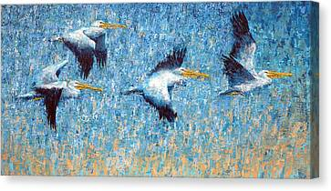 Pelicans 3 Canvas Print by Ned Shuchter