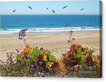 Pelicans And Flowers On Pismo Beach Canvas Print by Debra Thompson