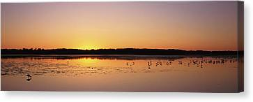 Pelicans And Other Wading Birds Canvas Print by Panoramic Images