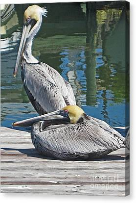 Pelicans At Rest Canvas Print by Joan McArthur