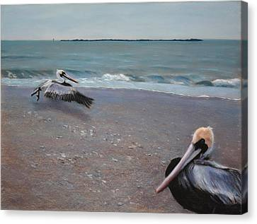 Pelicans Canvas Print by Christopher Reid