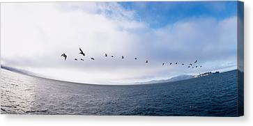 Pelicans Flying Over The Sea, Alcatraz Canvas Print by Panoramic Images