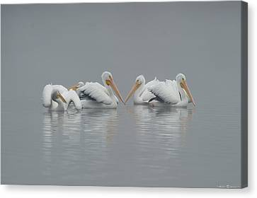 Canvas Print featuring the photograph Pelicans In The Mist by Avian Resources