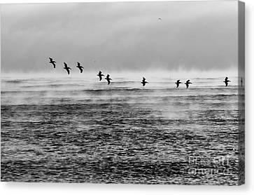 Pelicans In The Mist Canvas Print by Lynda Dawson-Youngclaus