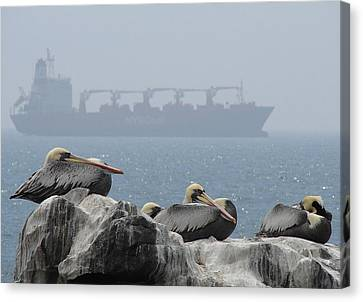 Canvas Print featuring the photograph Pelicans In The Mist by Ramona Johnston