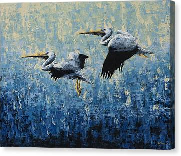 Pelicans Canvas Print by Ned Shuchter