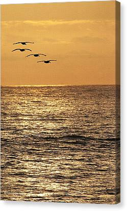 Canvas Print featuring the photograph Pelicans Ocean And Sunsetting by Tom Janca