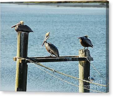 Pelicans On A Break Canvas Print by Mel Steinhauer