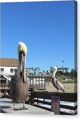 Pelicans On Pier Canvas Print