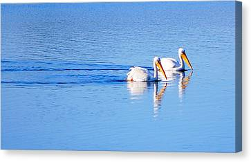 Canvas Print featuring the photograph Pelicans On The Bay by AJ  Schibig