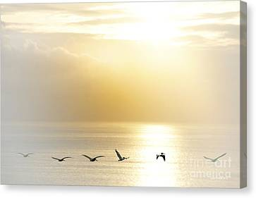 Pelicans Over Malibu Beach California Canvas Print by Artist and Photographer Laura Wrede