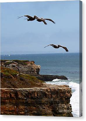 Canvas Print featuring the photograph Pelicans by Theresa Ramos-DuVon