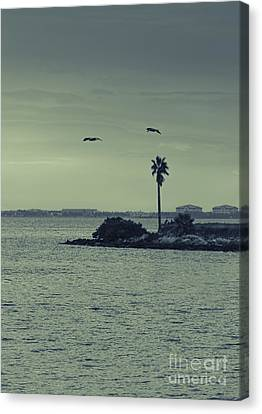 Pelicants And Palm Canvas Print by Marvin Spates