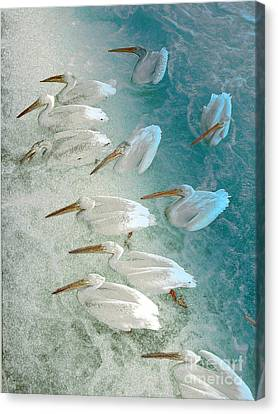Pellican Frenzy Canvas Print by Stuart Turnbull