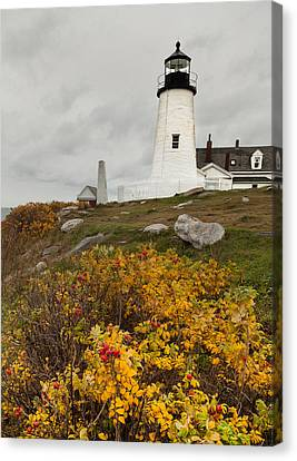 Pemaquid Point Lighthouse And Sea Roses Canvas Print