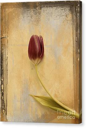 Penchant Naturel 03bt03c Canvas Print by Variance Collections