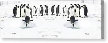 Canvas Print featuring the photograph Penguin Lunch Time by R Muirhead Art