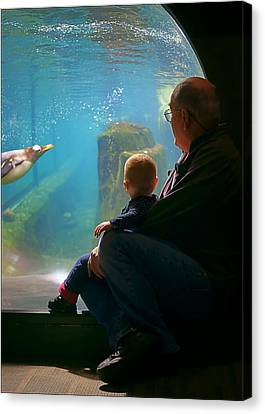 Penguin Watch #2 Canvas Print by Nikolyn McDonald