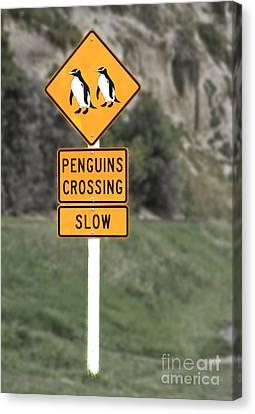 Penguins Crossing Oamaru Canvas Print