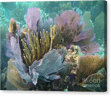 Pennekamp Canvas Print - Pennekamp Bouquet by Adam Jewell