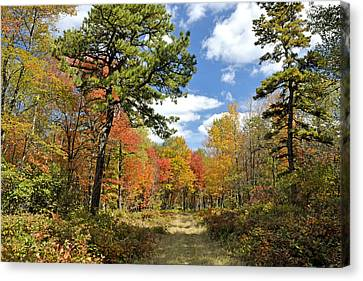 Pennsylvania Forest In Autumn Pocono Mountains Canvas Print