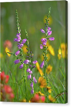 Close Focus Floral Canvas Print - Penstemon In A Field Of Other by Tim Fitzharris