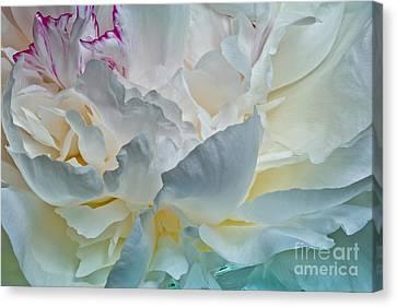 Peonie 2012 Canvas Print