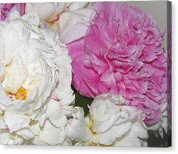 Canvas Print featuring the photograph Peonies 11 by Margaret Newcomb