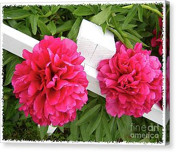 Canvas Print featuring the photograph Peonies Resting On White Fence by Barbara Griffin
