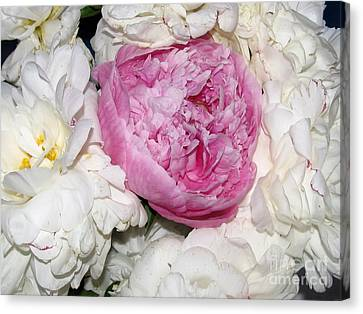 Canvas Print featuring the photograph Peony Bouquet 13 by Margaret Newcomb