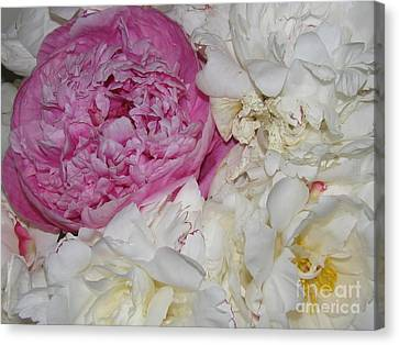 Canvas Print featuring the photograph Peony Bouquet 14 by Margaret Newcomb