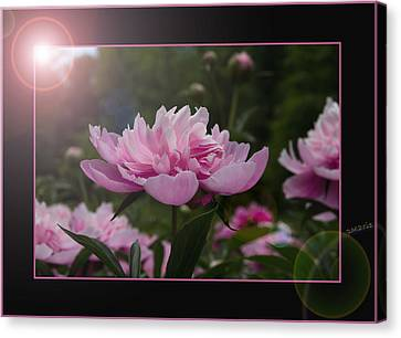 Canvas Print featuring the photograph Peony Garden Sun Flare by Patti Deters