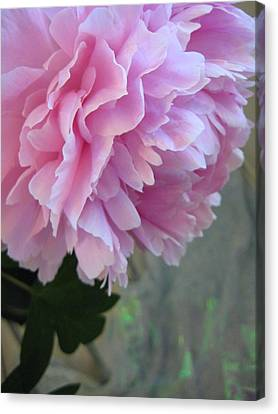 Peony Glory Canvas Print by Shirley Sirois