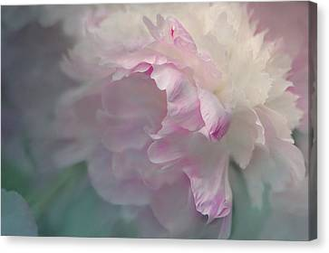 Peony Canvas Print by Jeff Burgess