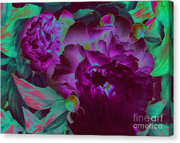 Peony Passion Canvas Print by First Star Art