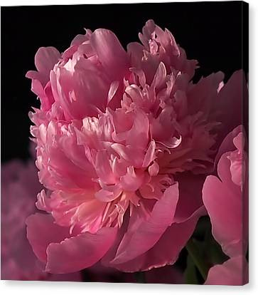 Peony Canvas Print by Rona Black
