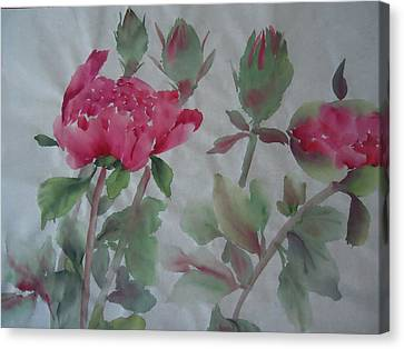 Peony010 Canvas Print