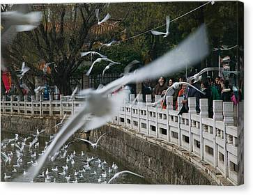 People Feeding The Gulls In A Park Canvas Print by Panoramic Images