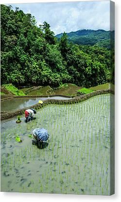 People Harvesting Canvas Print by Michael Runkel