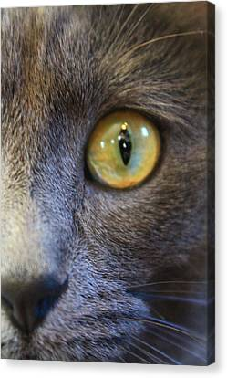 Pepper's Eye Canvas Print