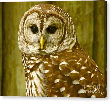 Canvas Print featuring the photograph Perched by Alice Mainville
