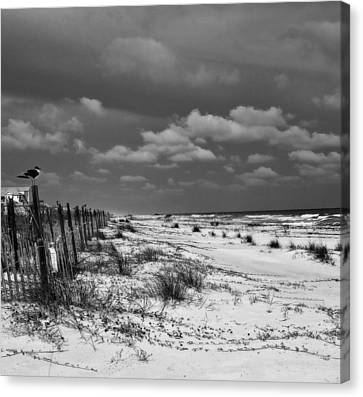 Perched At St. George Island Canvas Print by Toni Hopper