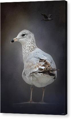 Perched Nearby Canvas Print