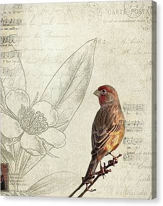Finch Canvas Print - Perched by Rebecca Cozart