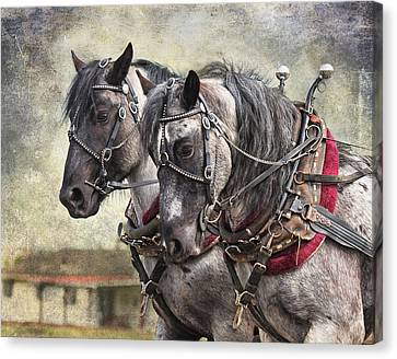 Percheron Team Canvas Print