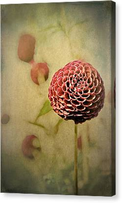 Perennial Gardens - Fall #01 Canvas Print by Loriental Photography